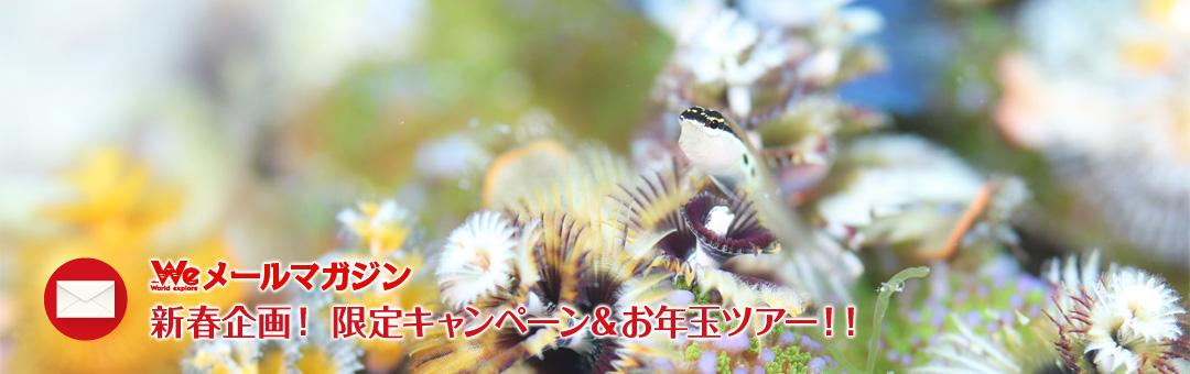 Weメールマガジン 新春企画! 限定キャンペーン&お年玉ツアー!!