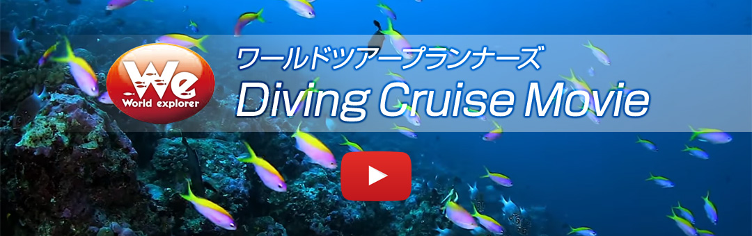Diving Cruise Promotion Movie