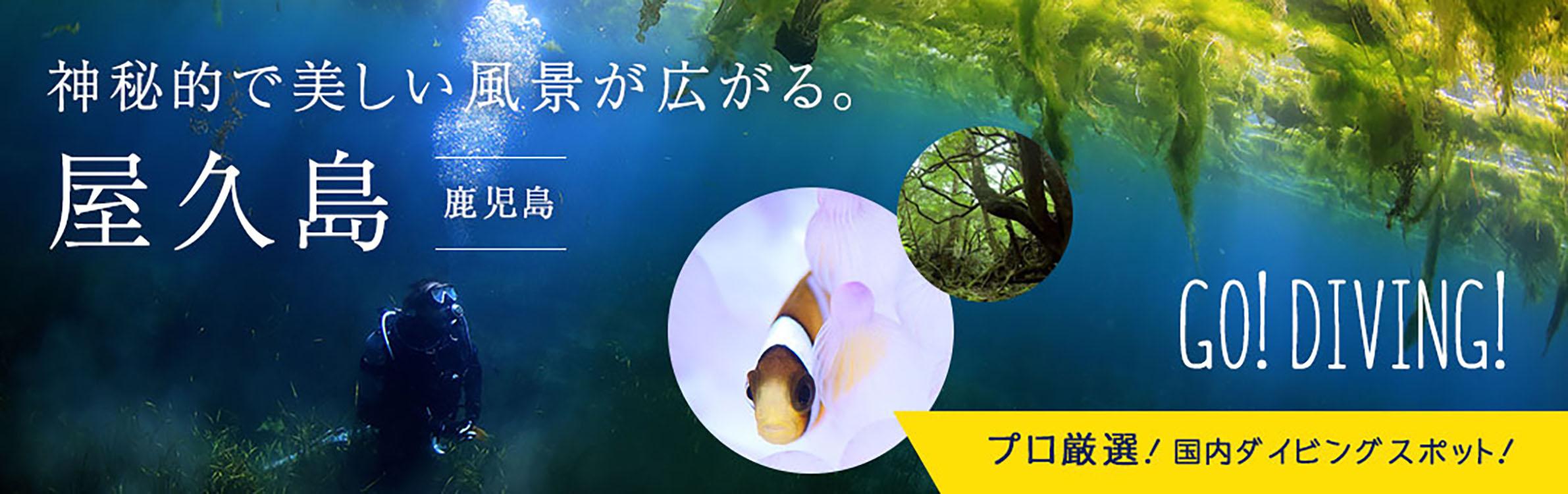 屋久島ダイビング情報