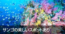 サンゴの美しいスポットあり