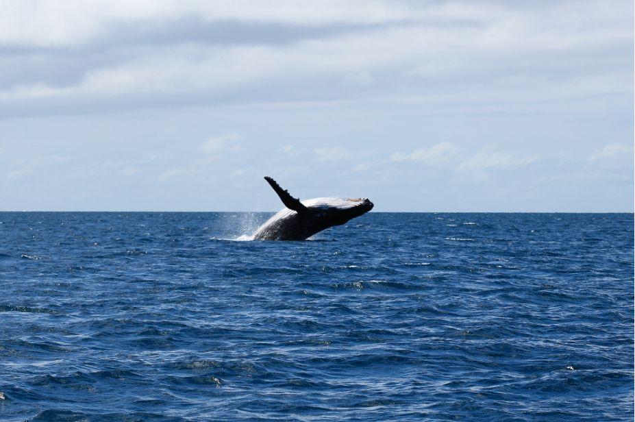 ニューカレドニア ダイビング情報1-3