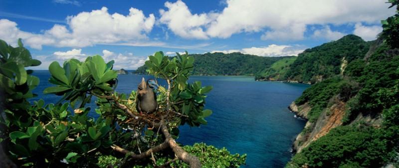 ココ島 画像6