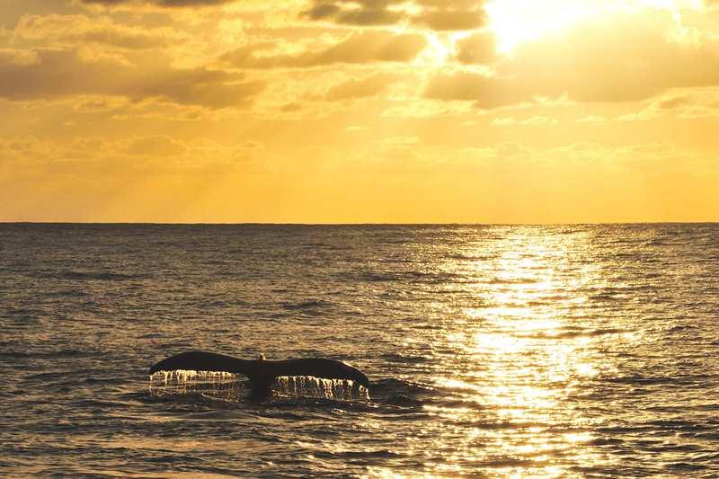 ソコロ諸島 画像2