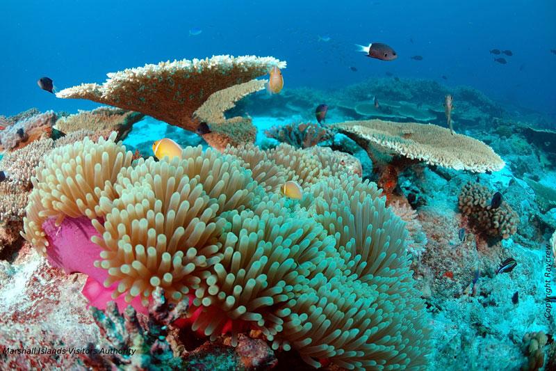サンゴの楽園でダイビング1-1