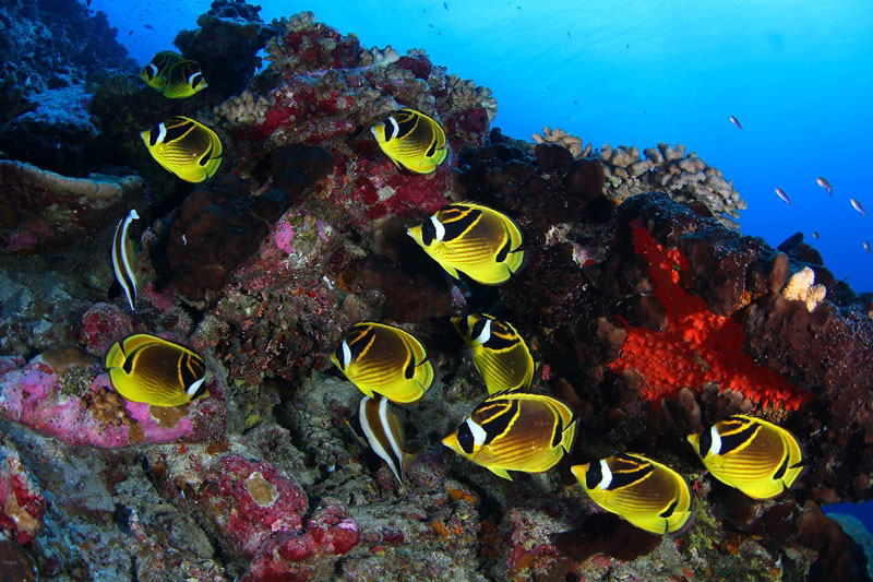 「地球上で最も魚影が濃い海」と称された海1-1