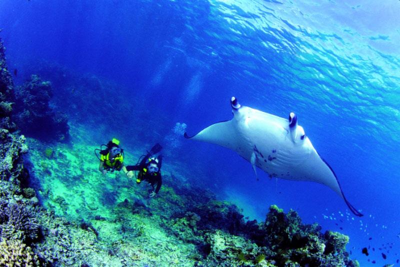 「地球上で最も魚影が濃い海」と称された海1-2