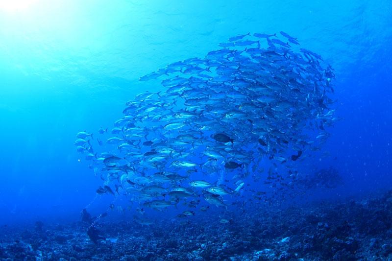 「地球上で最も魚影が濃い海」と称された海1-3