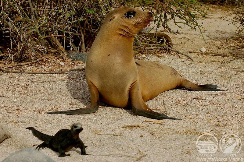 ガラパゴス諸島 画像5