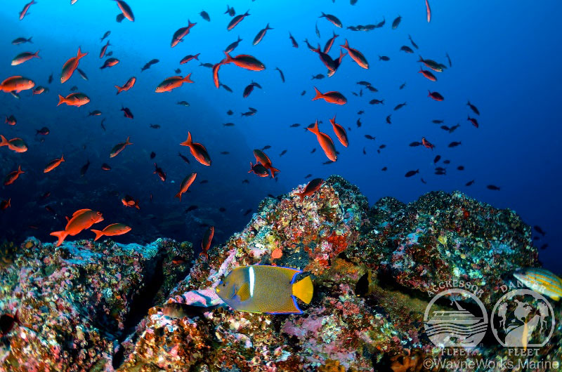 ココ島 画像8