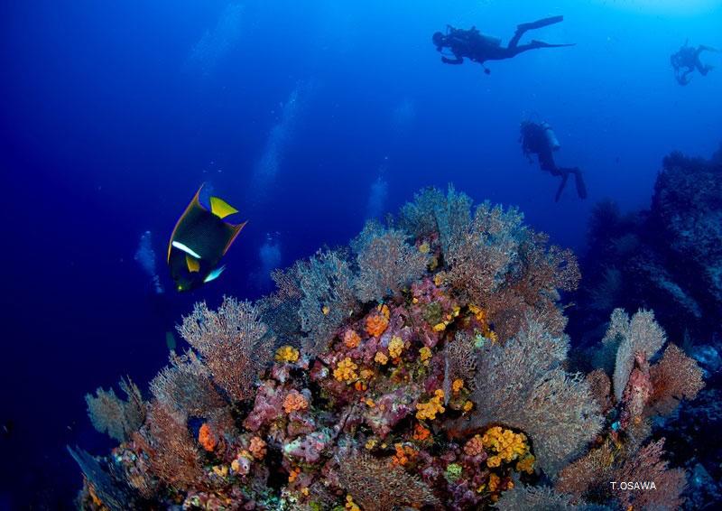 マルペロ島