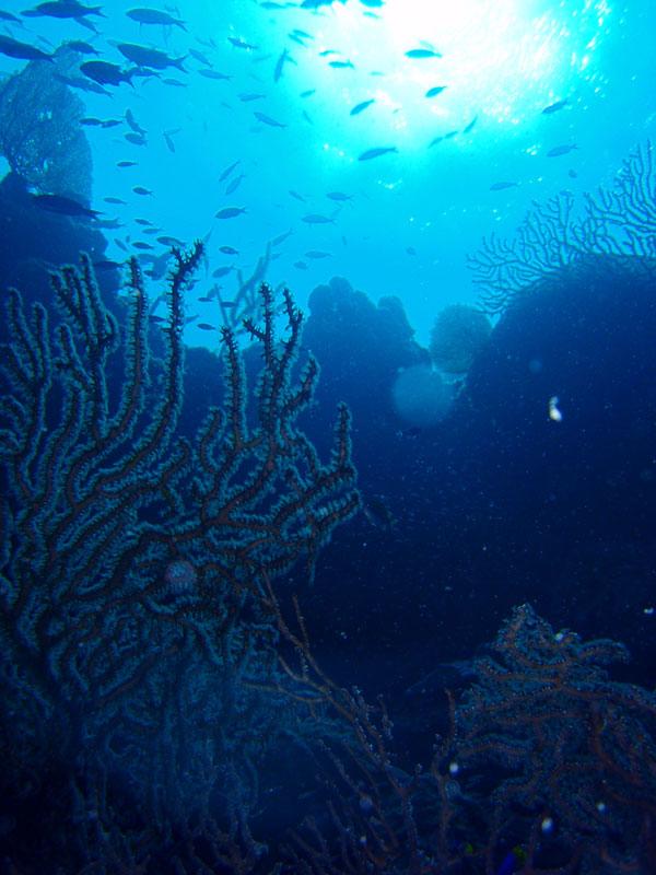 世界屈指のホールとサンゴ礁を体験する1-3