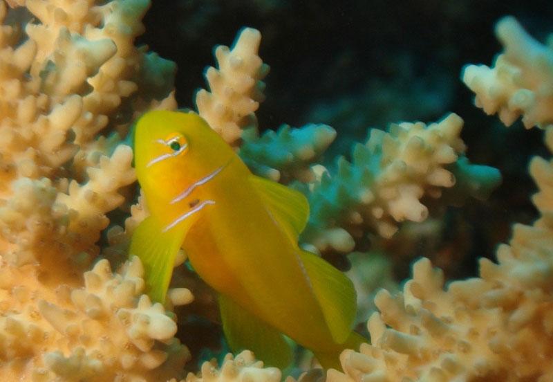 レッドシー(紅海)のダイビング1-2