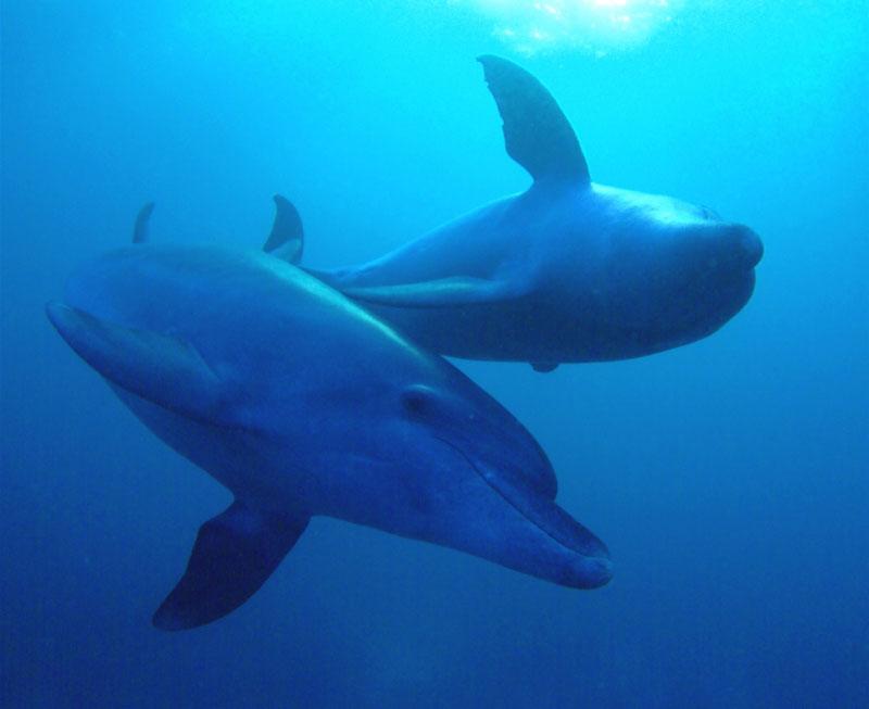 レッドシー(紅海)のダイビング1-3