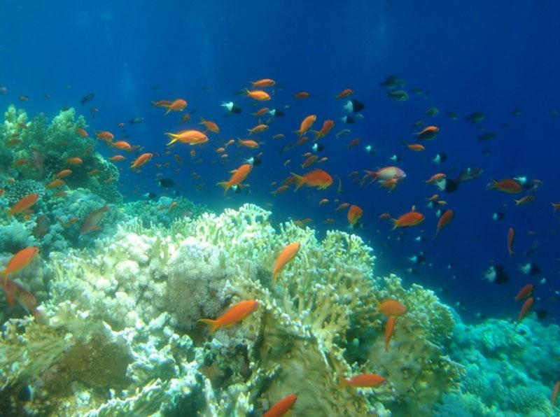 レッドシー(紅海)のダイビング1-4