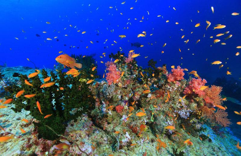 アンダマン諸島 画像4