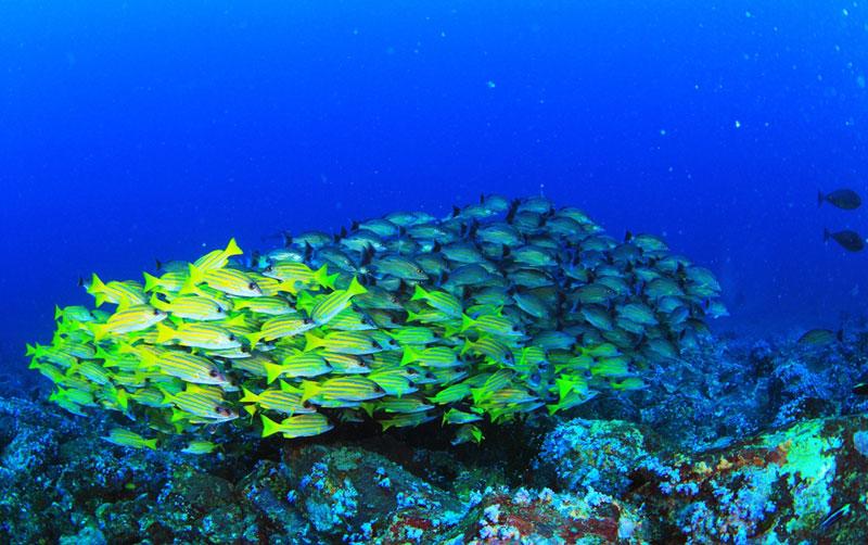 アンダマン諸島 画像5