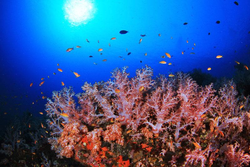 アンダマン諸島 画像6