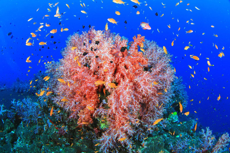 アンダマン諸島 画像7
