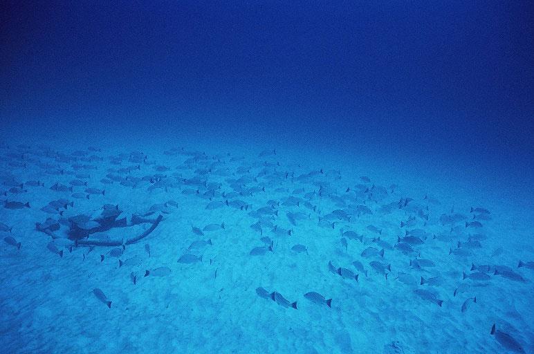 太平洋クリスマス島 画像4