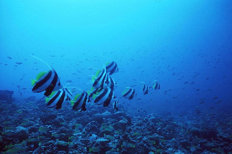 太平洋クリスマス島 画像6