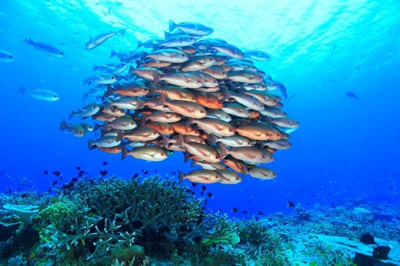 トゥフィの海の魅力1-1
