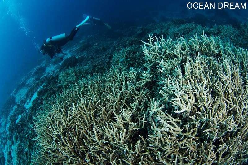 キミシマ環礁2-1