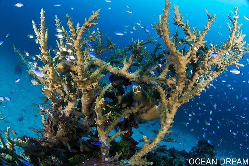 キミシマ環礁2-3