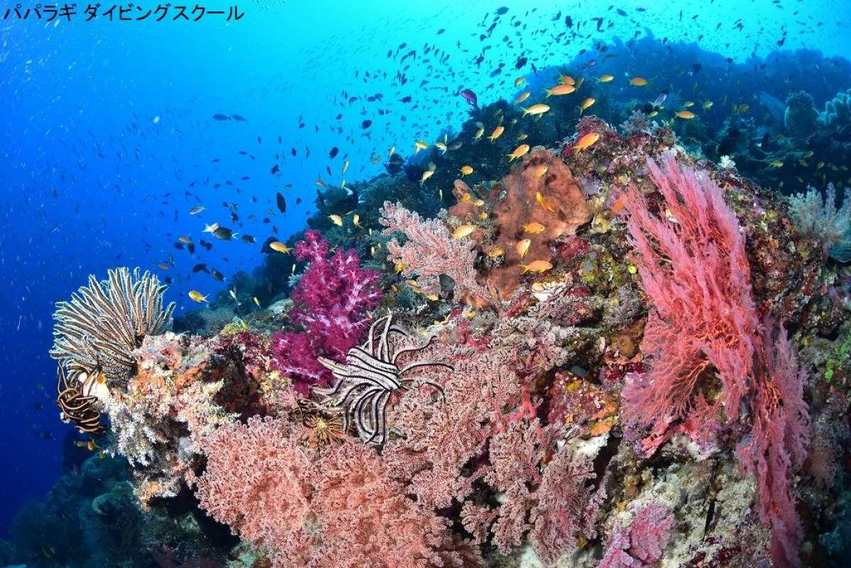 トゥフィの海の魅力1-3