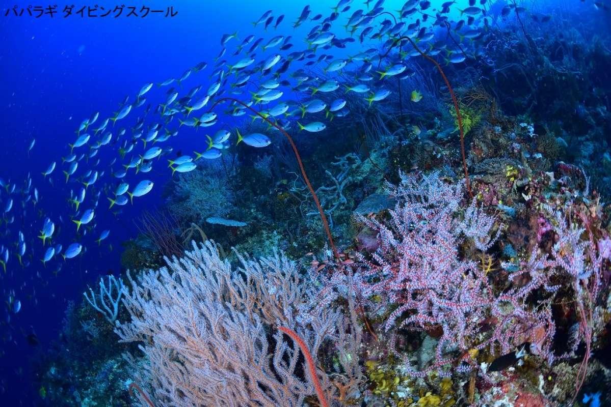 トゥフィの海の魅力1-4