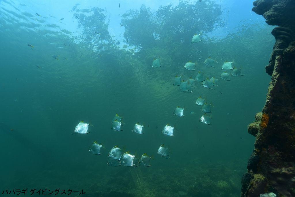 トゥフィの海の魅力1-5