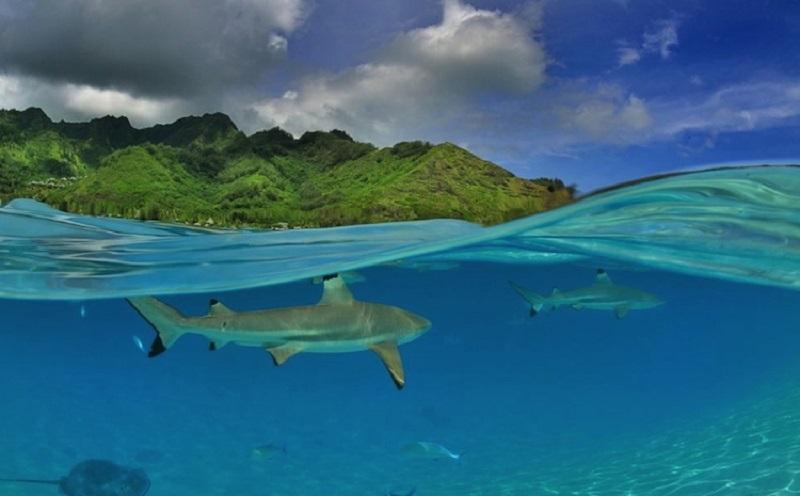 ファカラバ島 画像5