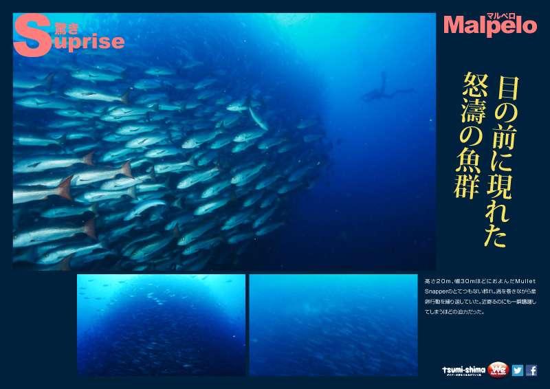 マルペロ島 画像10