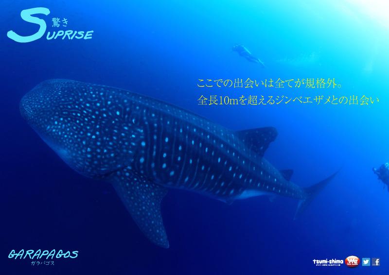 成田発 アメリカン航空 ガラパゴス諸島  最大21ダイブ付 12日間6