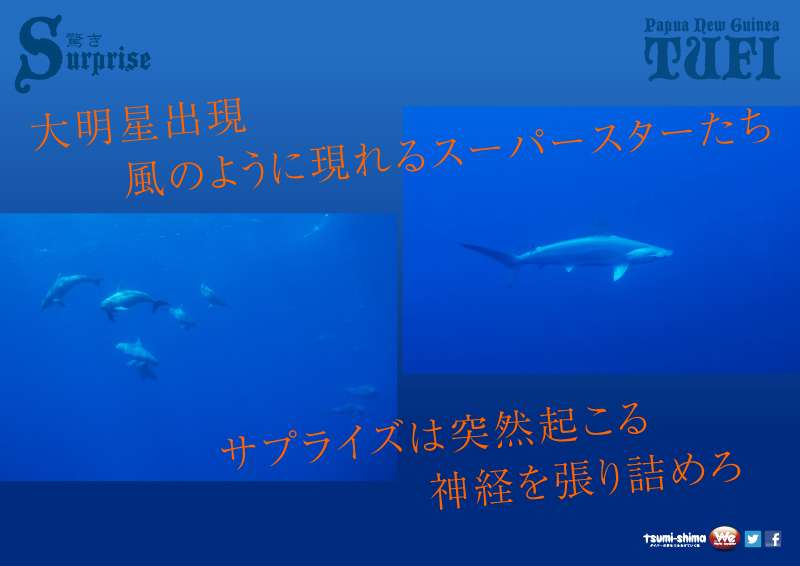 成田発 ニューギニア航空 トゥフィ  最大9ダイブ付 8日間7
