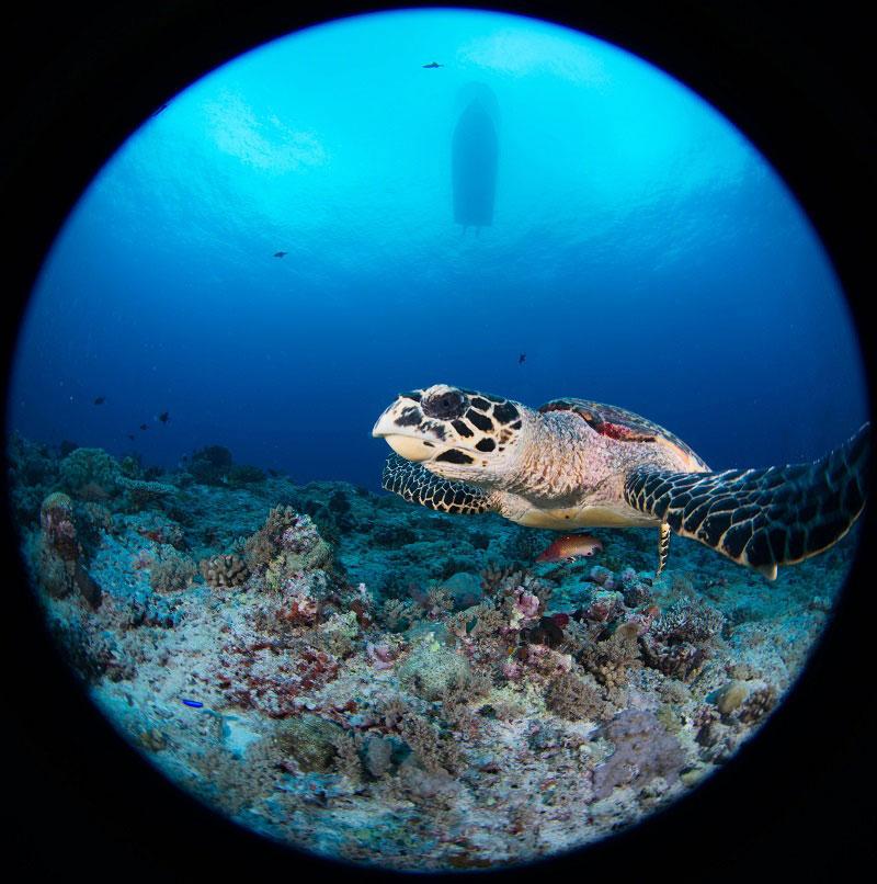 ダイバーを引きつける海2-4