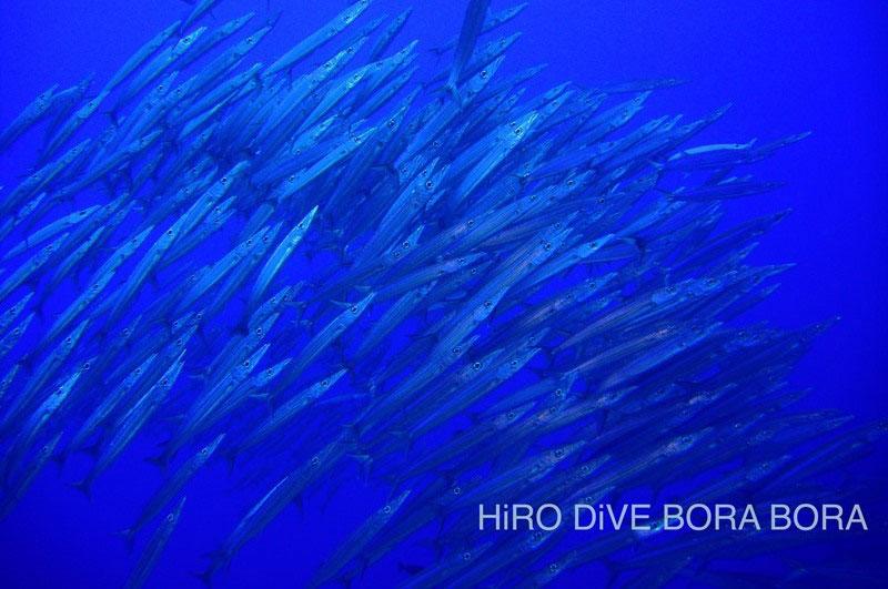 ボラボラ島 画像5