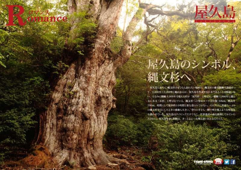 屋久島 画像14