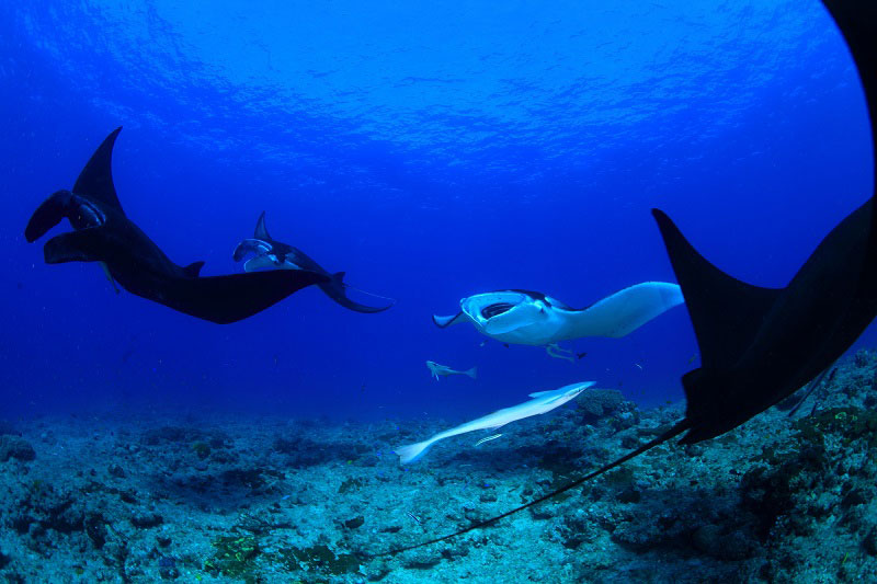 ニューカレドニア ダイビング情報1-1