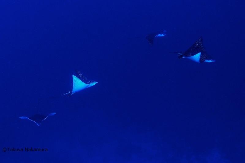 ソロモン諸島 画像4