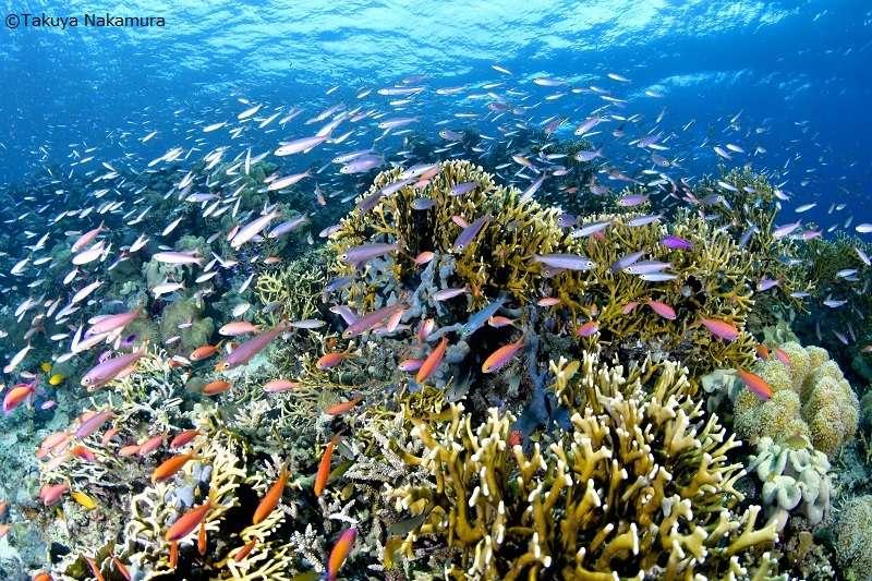 ソロモン諸島 画像7