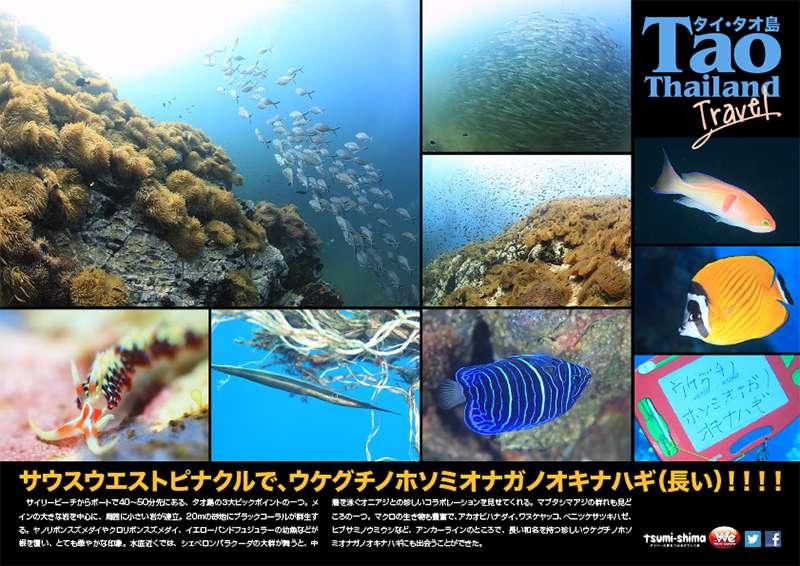 サムイ・タオ島 画像13
