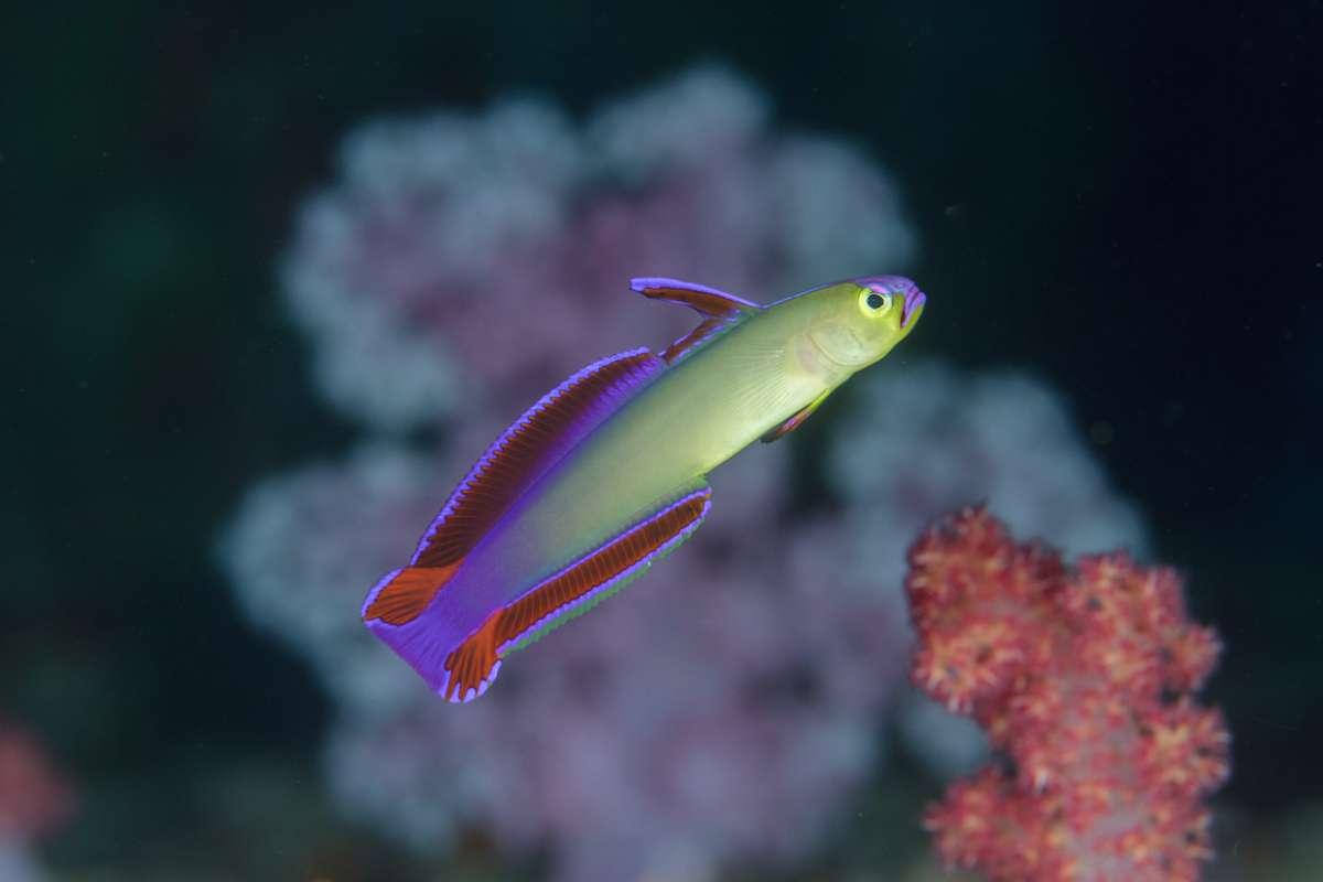アンダマン海に浮かぶ宝石シミラン諸島 世界中のダイバーの憧れ・・・2-1