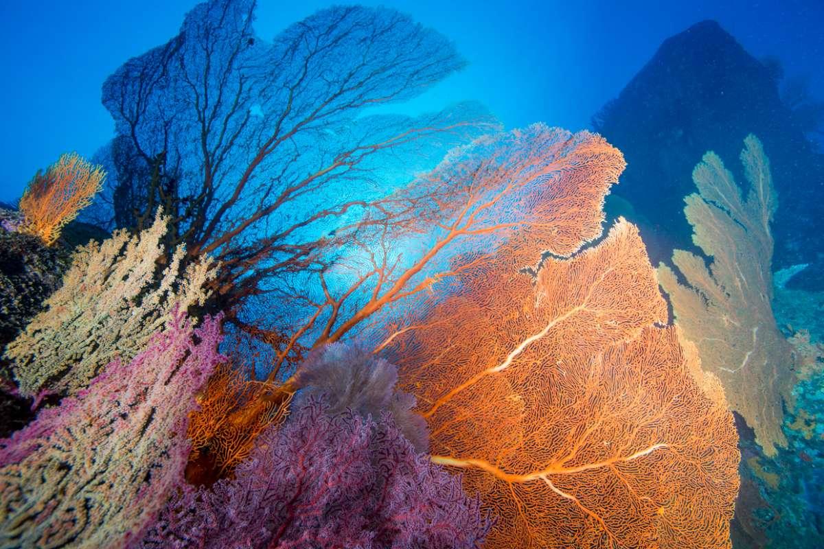 アンダマン海に浮かぶ宝石シミラン諸島 世界中のダイバーの憧れ・・・2-3