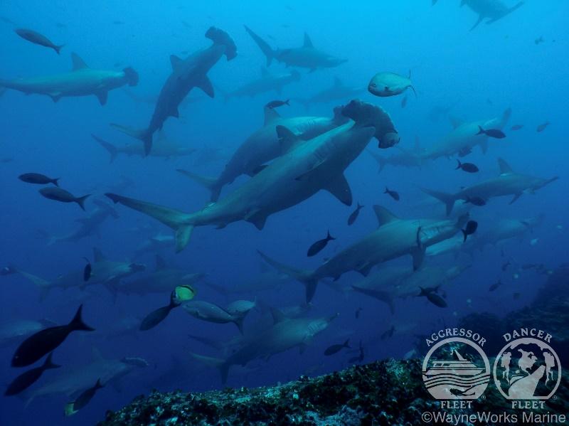 ガラパゴス諸島 画像1