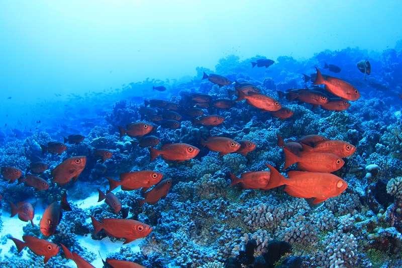 ファカラバ島 画像7