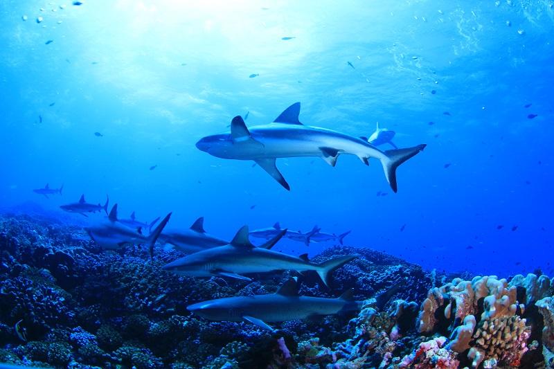 ファカラバ島 画像8