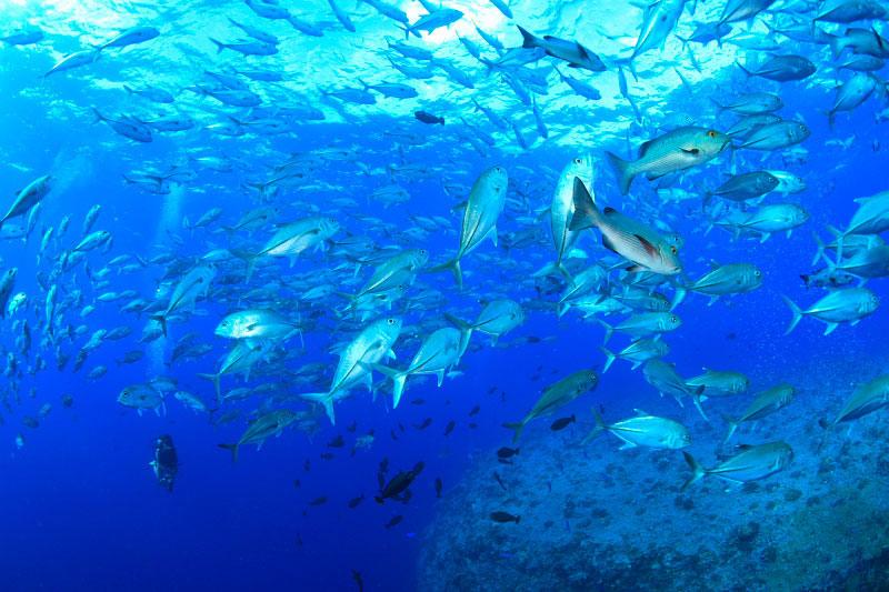 パラオの海1-2