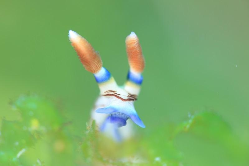リロアン 画像9