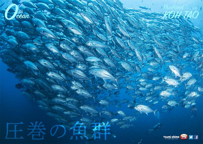 サムイ・タオ島 画像11