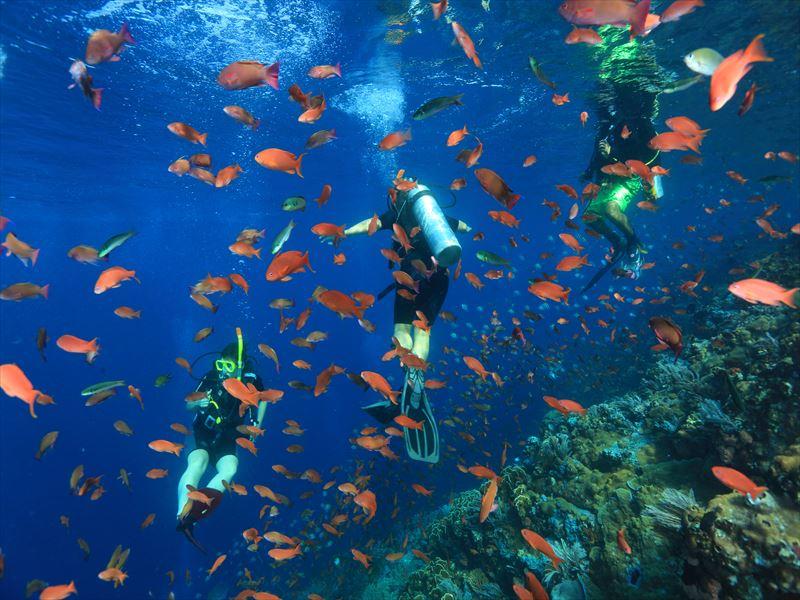 コモド諸島 画像9